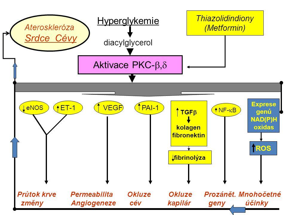 Hyperglykemie Srdce Cévy Aktivace PKC-b,d Thiazolidindiony (Metformin)