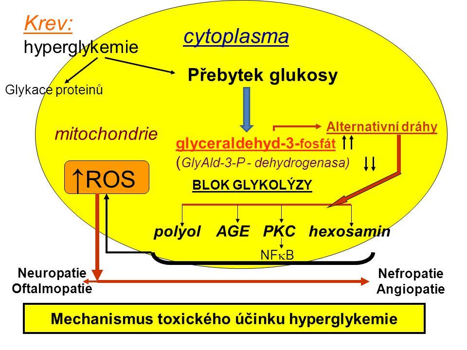 Nefropatie Angiopatie Mechanismus toxického účinku hyperglykemie
