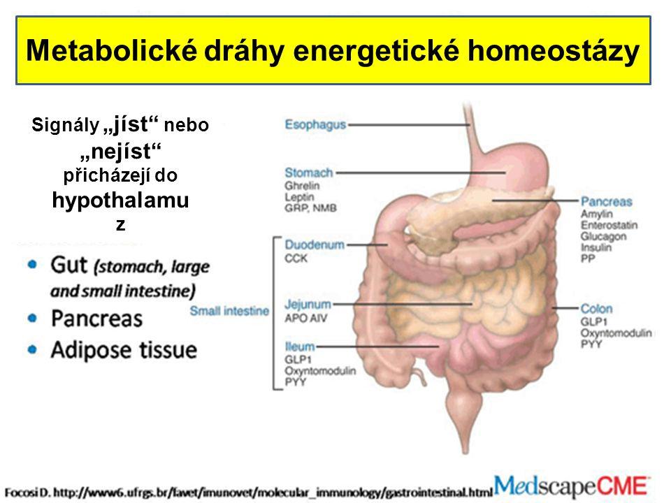Metabolické dráhy energetické homeostázy