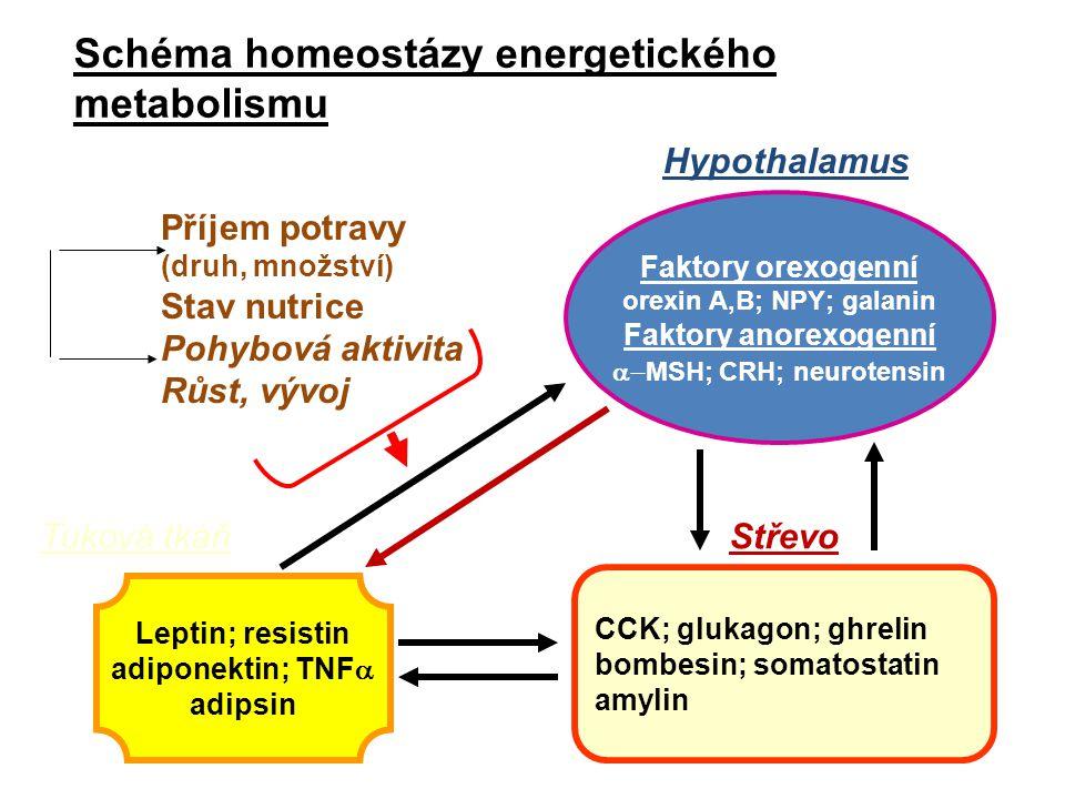 Schéma homeostázy energetického metabolismu