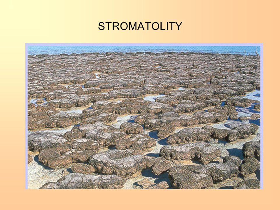 STROMATOLITY