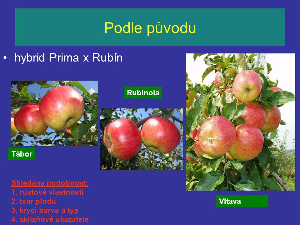 Podle původu hybrid Prima x Rubín Rubinola Tábor Shledána podobnost: