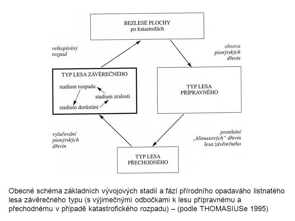 Obecné schéma základních vývojových stadií a fází přírodního opadaváho listnatého lesa závěrečného typu (s výjimečnými odbočkami k lesu přípravnému a přechodnému v případě katastrofického rozpadu) – (podle THOMASIUSe 1995)