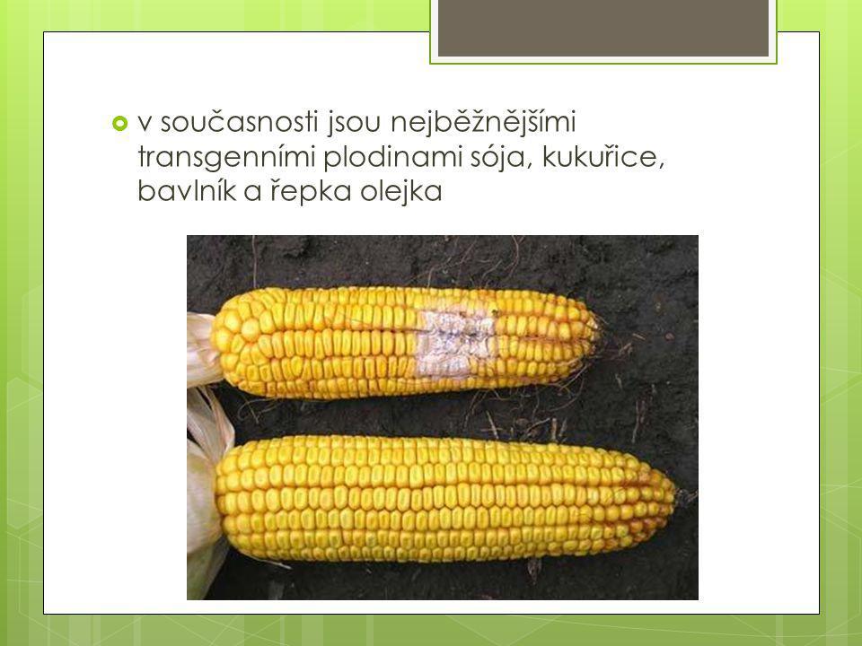 v současnosti jsou nejběžnějšími transgenními plodinami sója, kukuřice, bavlník a řepka olejka