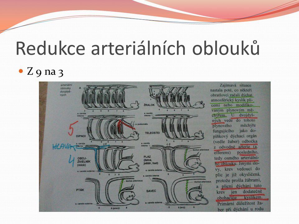 Redukce arteriálních oblouků