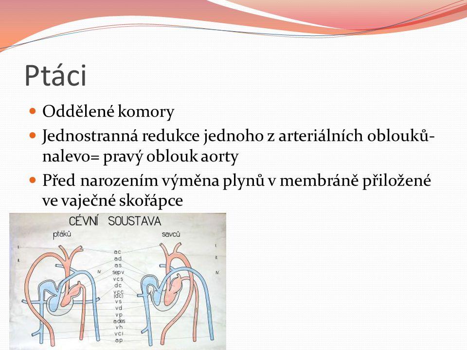 Ptáci Oddělené komory. Jednostranná redukce jednoho z arteriálních oblouků- nalevo= pravý oblouk aorty.