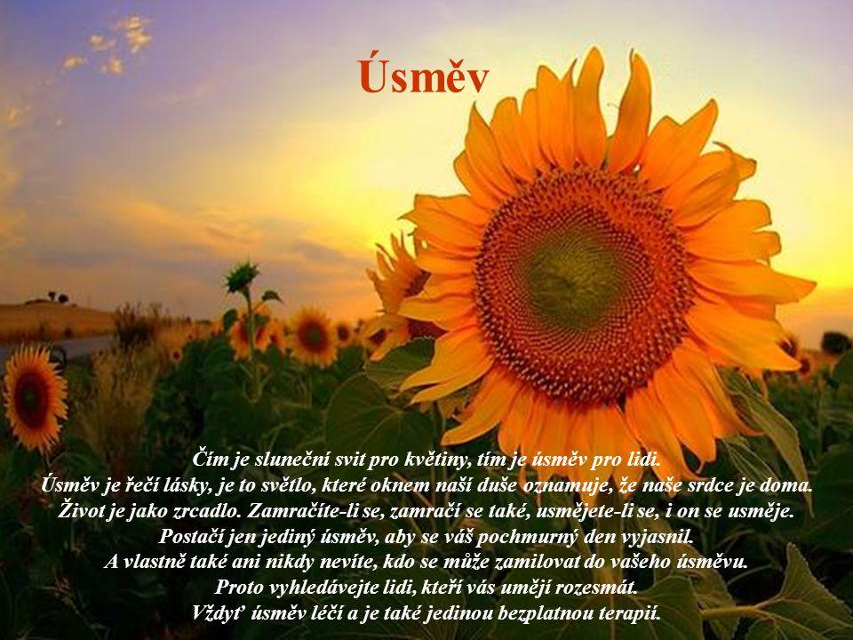 Čím je sluneční svit pro květiny, tím je úsměv pro lidi.