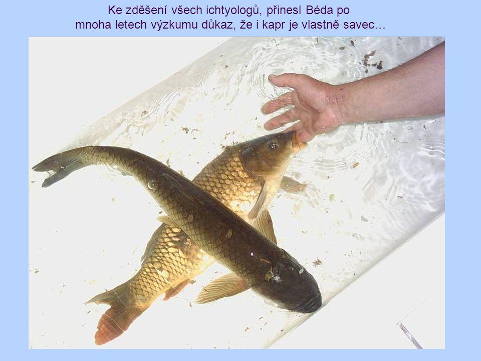 Ke zděšení všech ichtyologů, přinesl Béda po