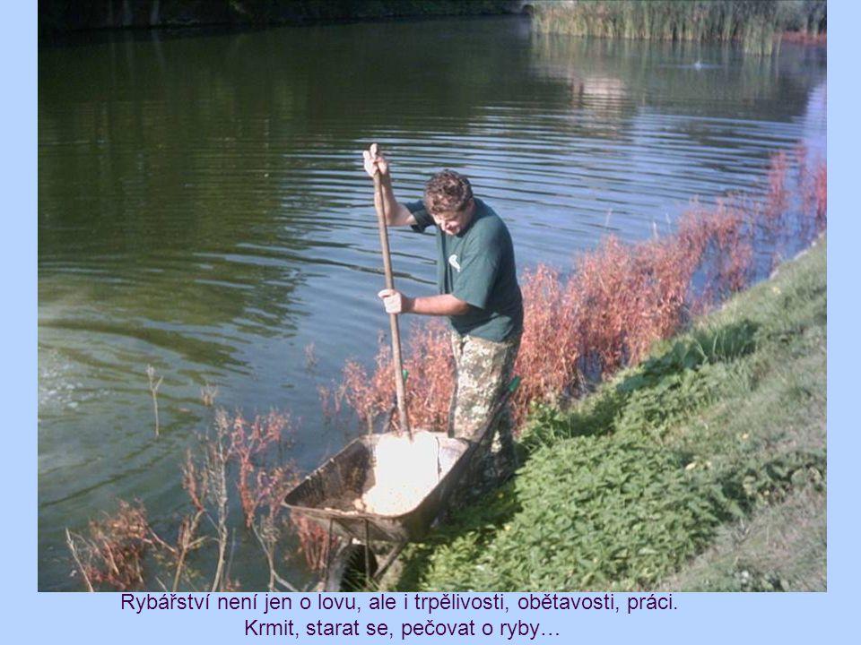 Rybářství není jen o lovu, ale i trpělivosti, obětavosti, práci.