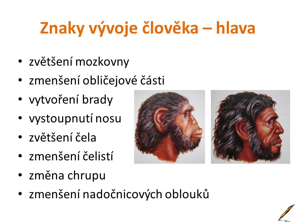Znaky vývoje člověka – hlava
