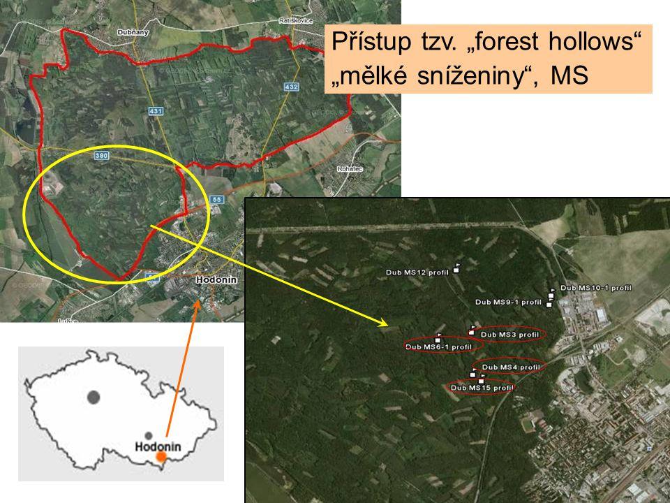 """Přístup tzv. """"forest hollows """"mělké sníženiny , MS"""