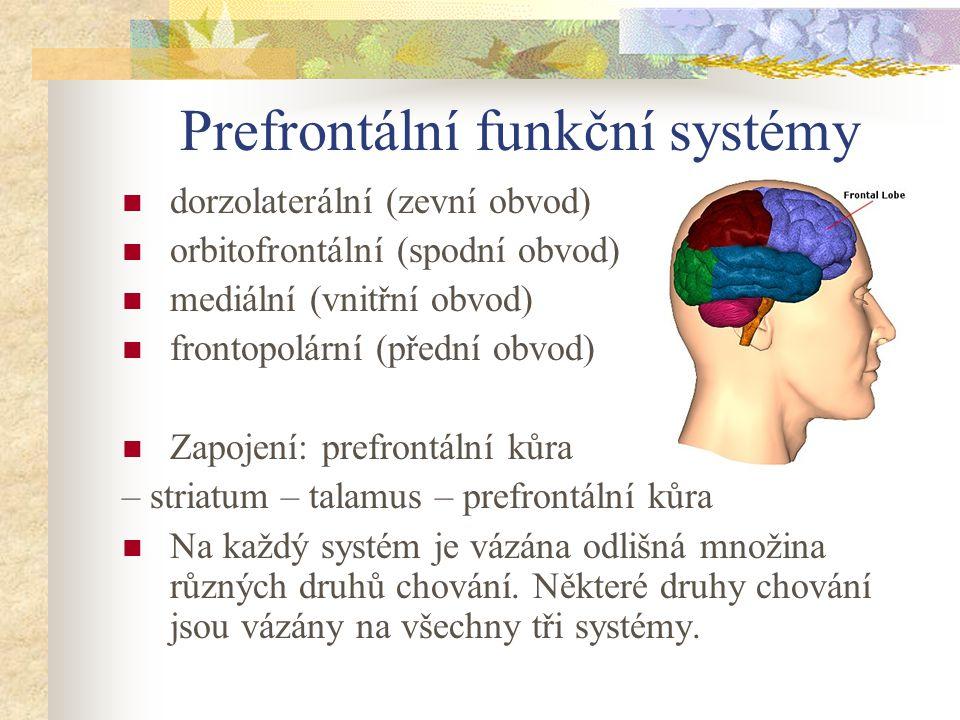 Prefrontální funkční systémy