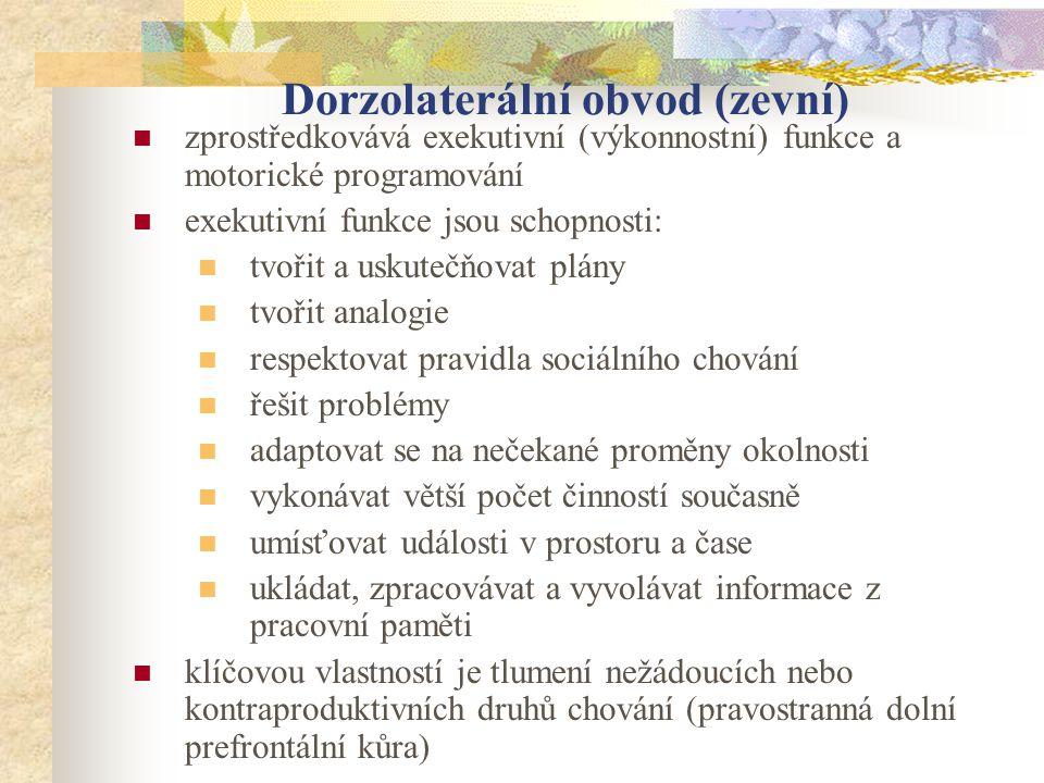 Dorzolaterální obvod (zevní)