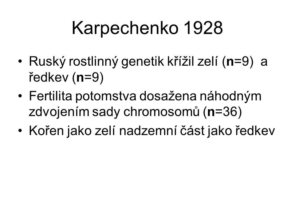 Karpechenko 1928 Ruský rostlinný genetik křížil zelí (n=9) a ředkev (n=9) Fertilita potomstva dosažena náhodným zdvojením sady chromosomů (n=36)