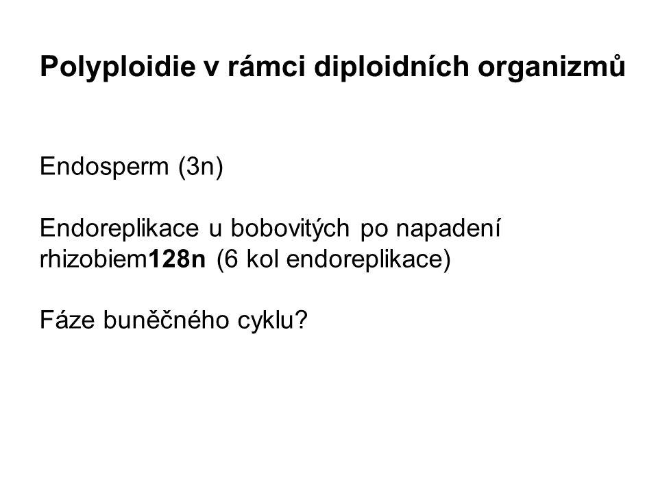 Polyploidie v rámci diploidních organizmů