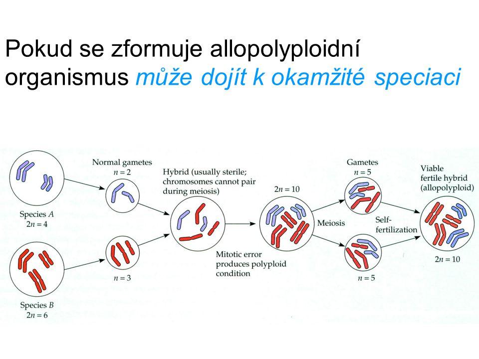 Pokud se zformuje allopolyploidní organismus může dojít k okamžité speciaci