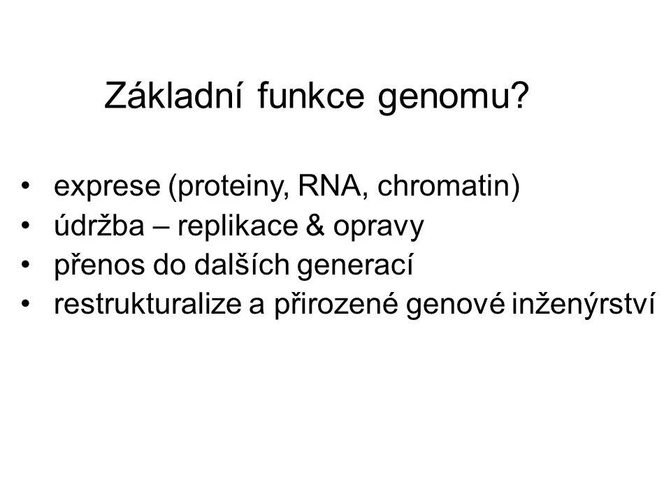 Základní funkce genomu