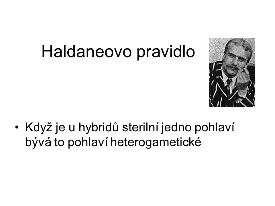 Haldaneovo pravidlo Když je u hybridů sterilní jedno pohlaví bývá to pohlaví heterogametické