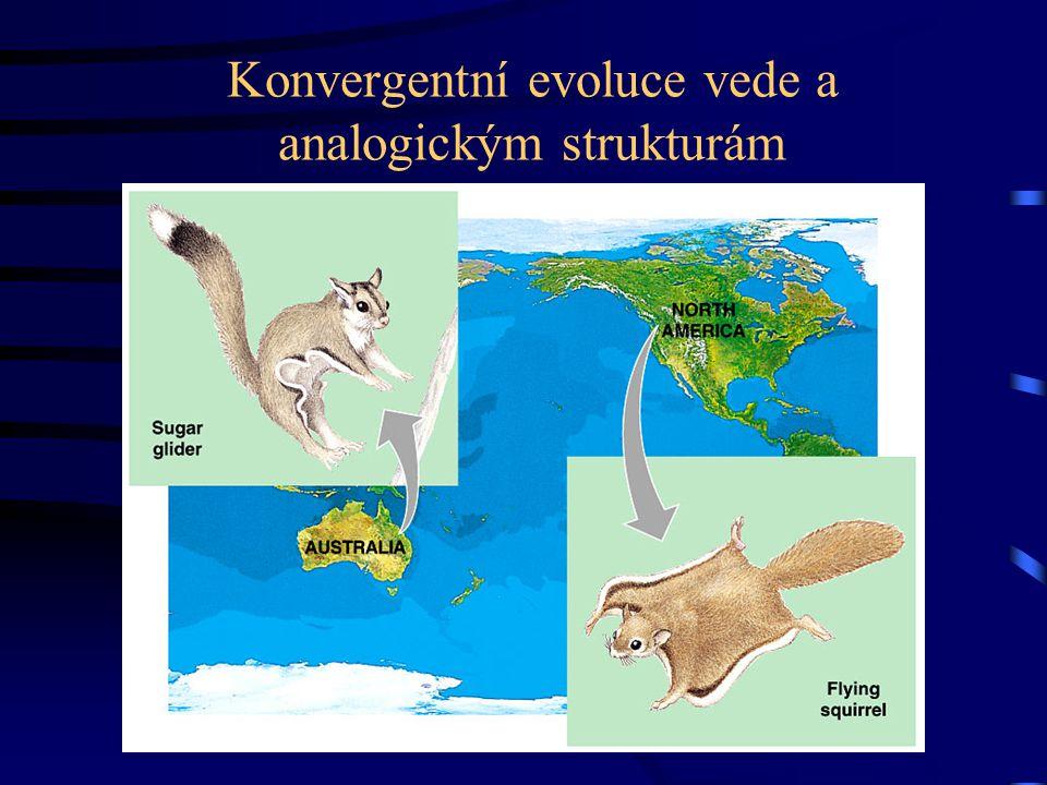 Konvergentní evoluce vede a analogickým strukturám