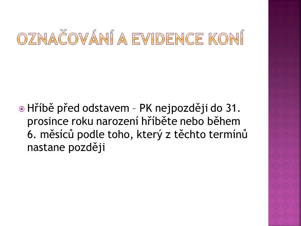 Označování a evidence koní
