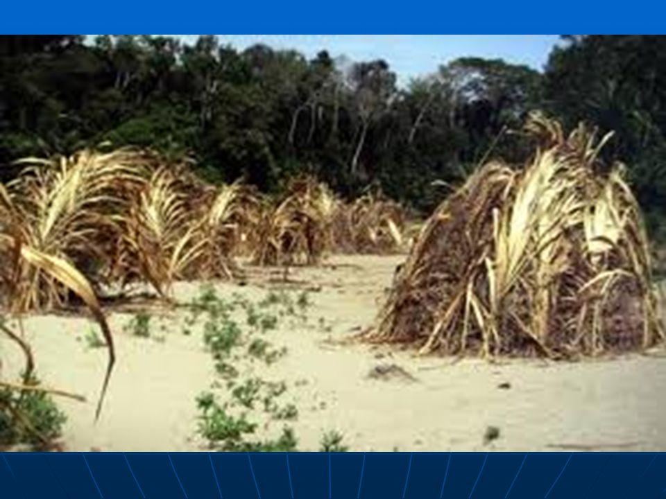 Palmové chýše neznámého peruánského kmene.