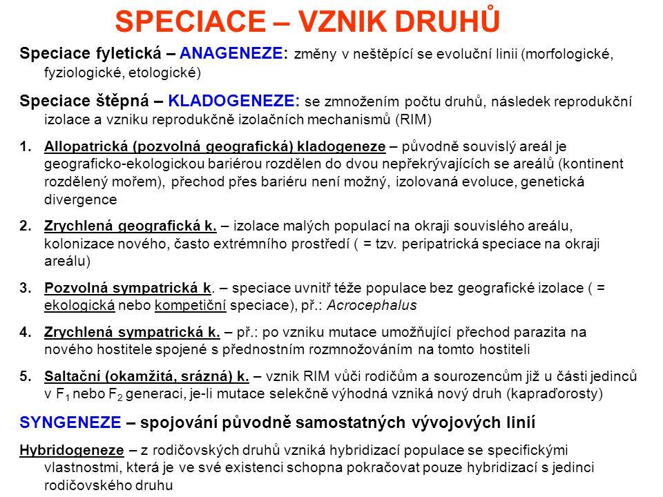 SPECIACE – VZNIK DRUHŮ Speciace fyletická – ANAGENEZE: změny v neštěpící se evoluční linii (morfologické, fyziologické, etologické)