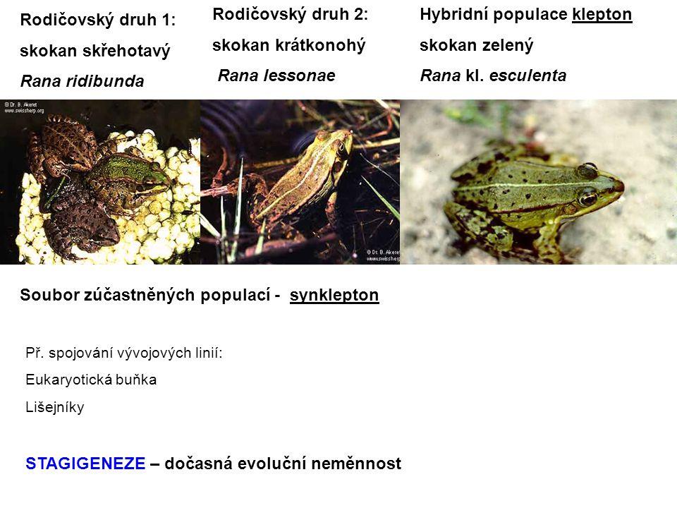 Hybridní populace klepton skokan zelený Rana kl. esculenta