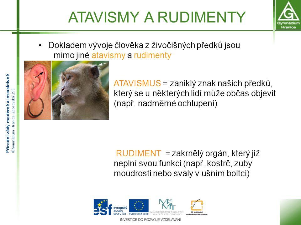 ATAVISMY A RUDIMENTY Dokladem vývoje člověka z živočišných předků jsou. mimo jiné atavismy a rudimenty.