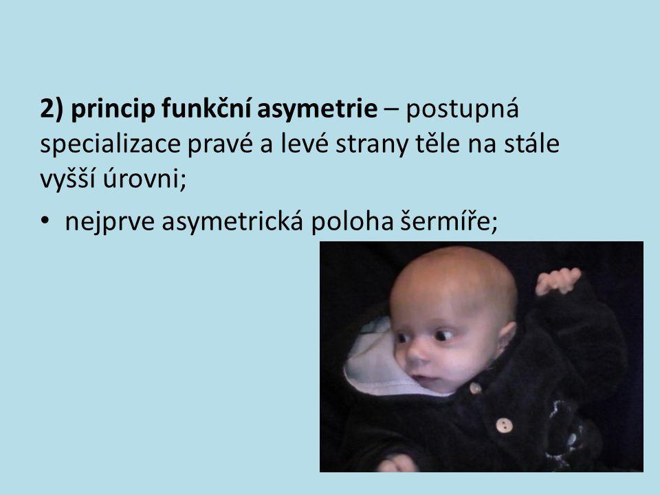 2) princip funkční asymetrie – postupná specializace pravé a levé strany těle na stále vyšší úrovni;