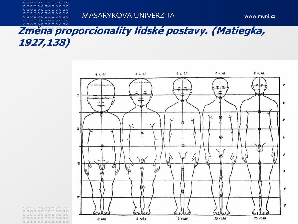 Změna proporcionality lidské postavy. (Matiegka, 1927,138)