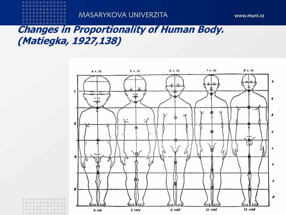 Changes in Proportionality of Human Body. (Matiegka, 1927,138)