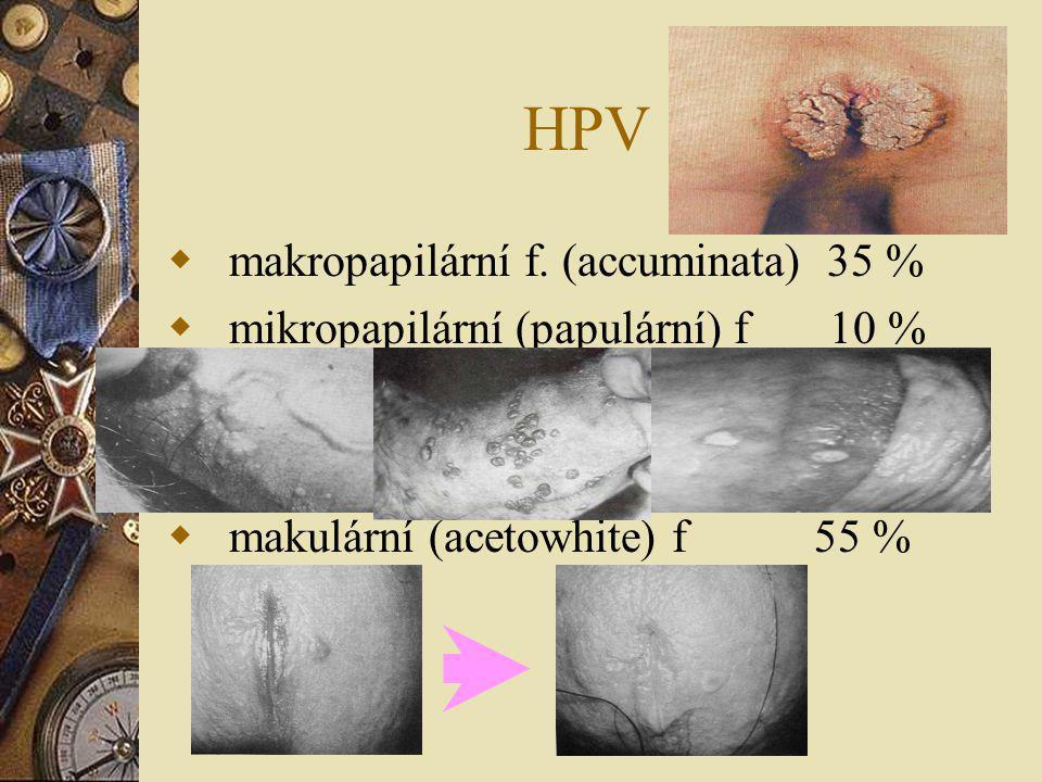 HPV makropapilární f. (accuminata) 35 %