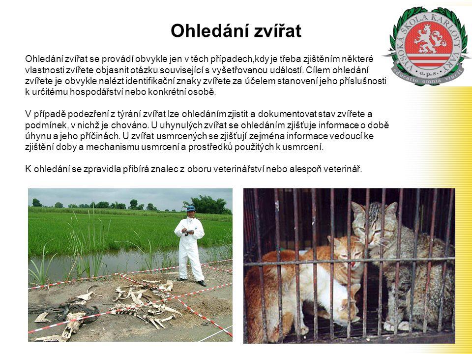 Ohledání zvířat
