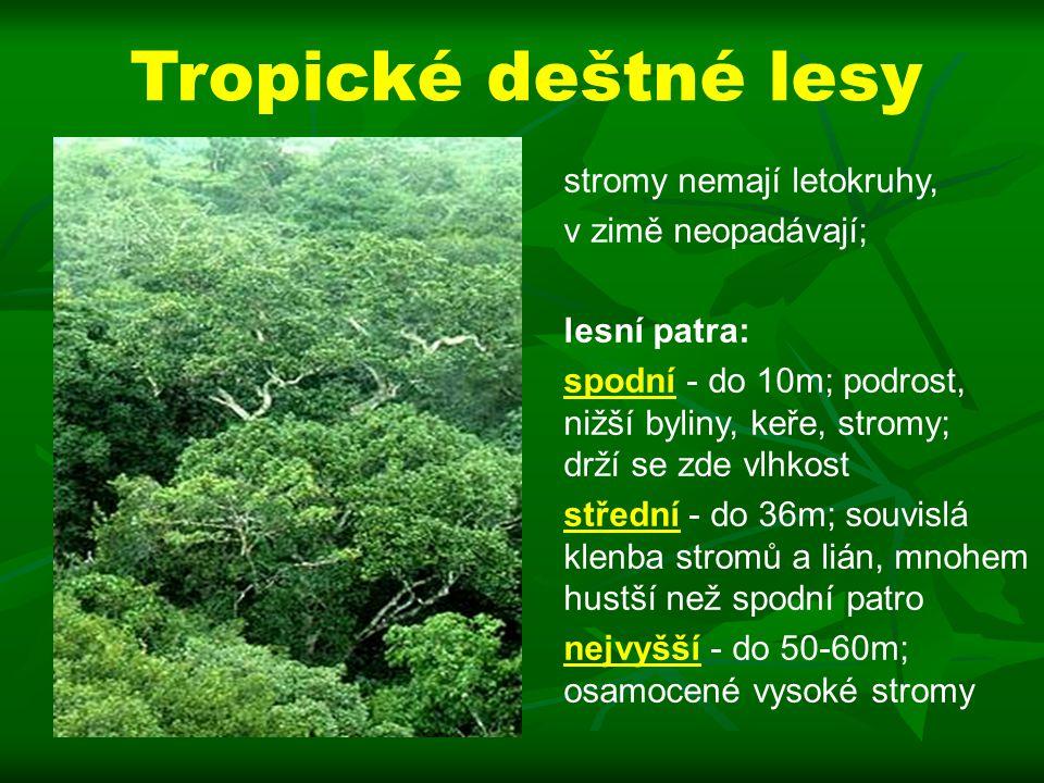 Tropické deštné lesy stromy nemají letokruhy, v zimě neopadávají;