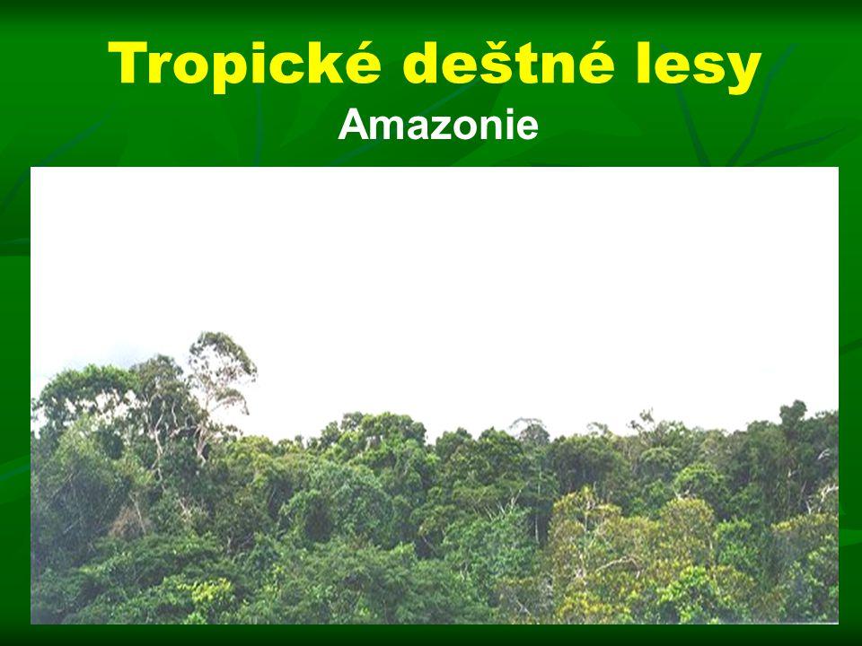 Tropické deštné lesy Amazonie