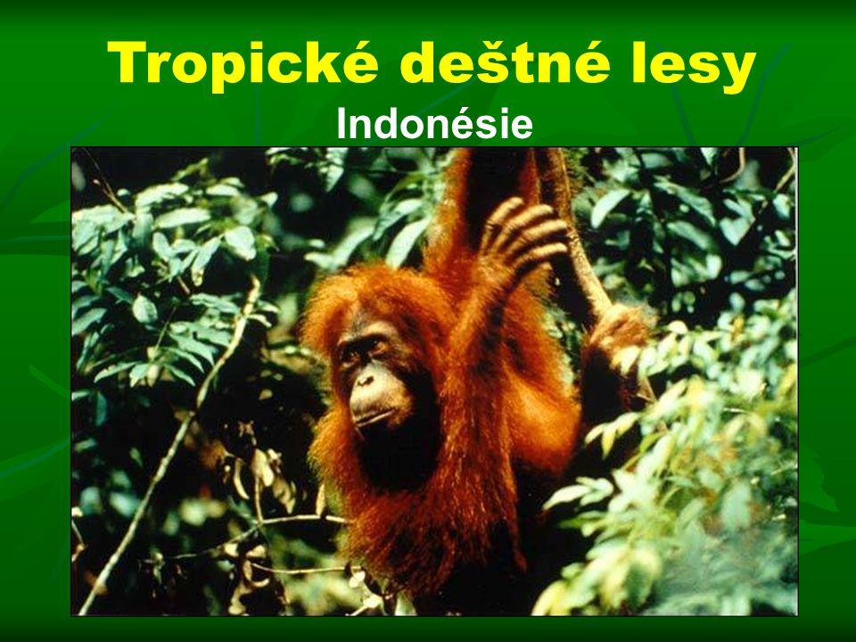 Tropické deštné lesy Indonésie