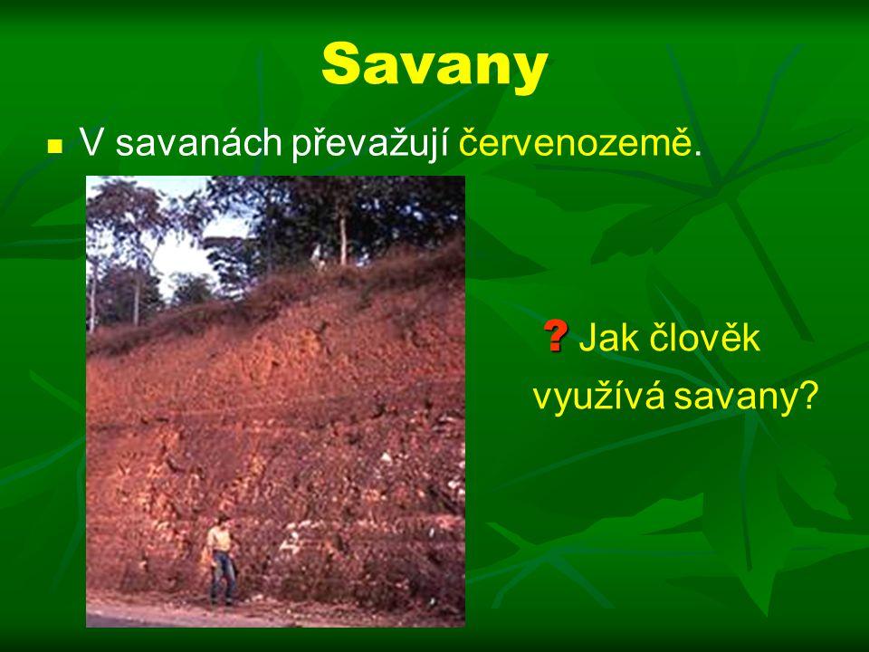 Savany V savanách převažují červenozemě. Jak člověk využívá savany