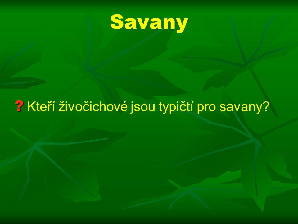 Savany Kteří živočichové jsou typičtí pro savany
