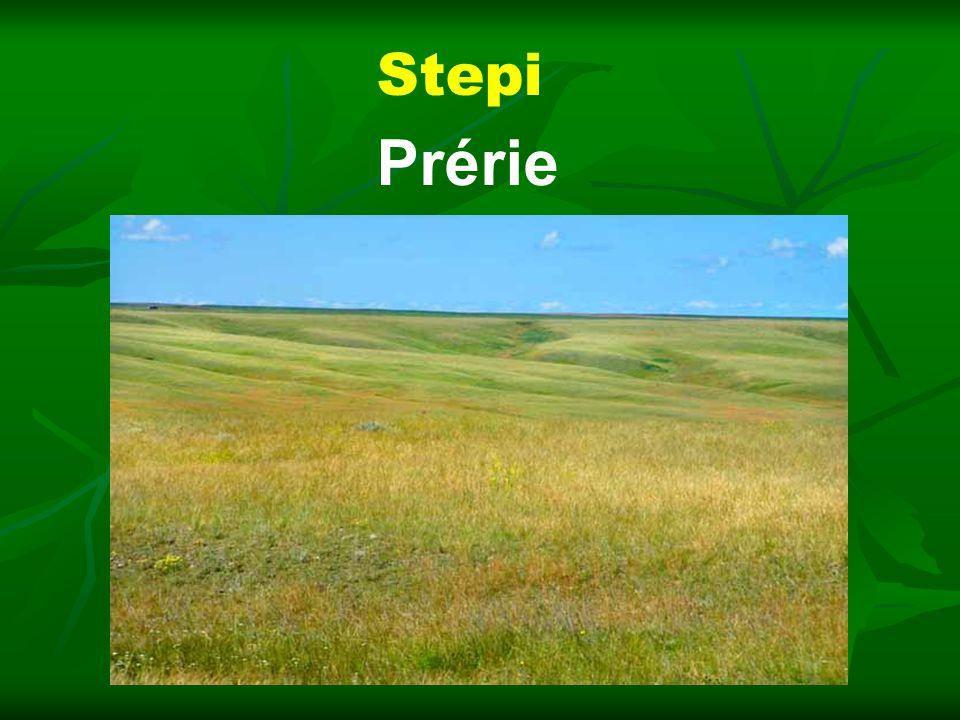 Stepi Prérie