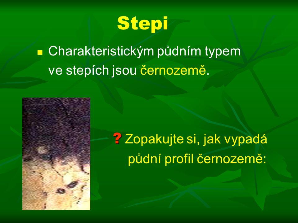 Stepi Charakteristickým půdním typem ve stepích jsou černozemě.