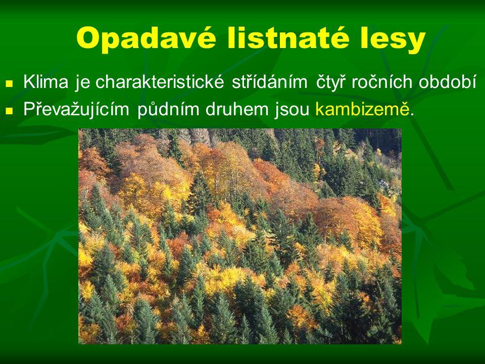 Opadavé listnaté lesy Klima je charakteristické střídáním čtyř ročních období.