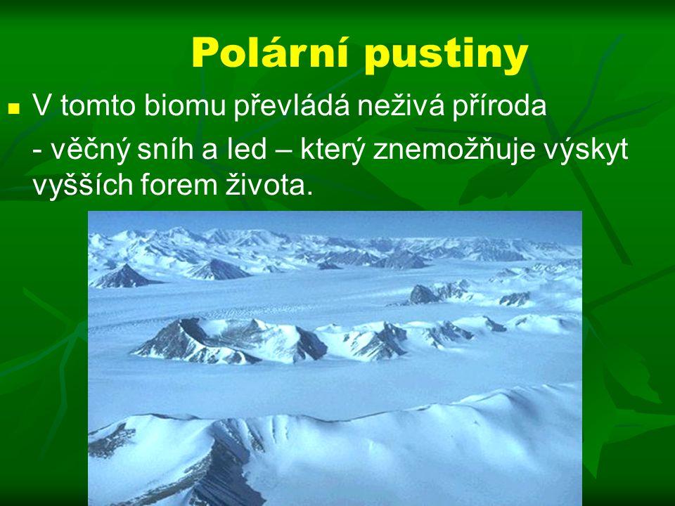 Polární pustiny V tomto biomu převládá neživá příroda