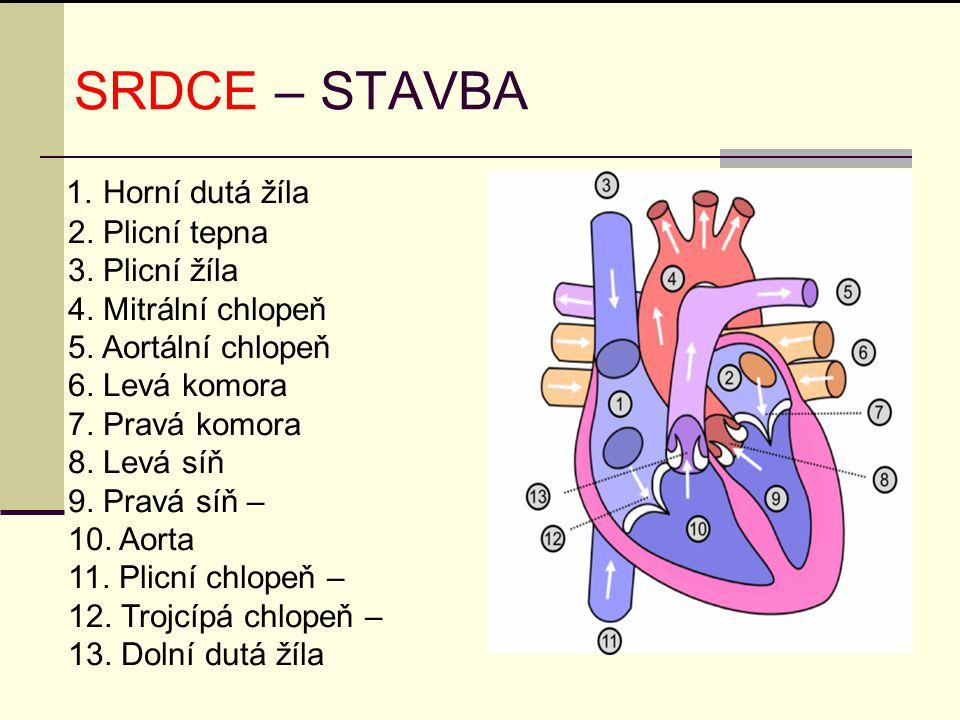 SRDCE – STAVBA 2. Plicní tepna 3. Plicní žíla 4. Mitrální chlopeň
