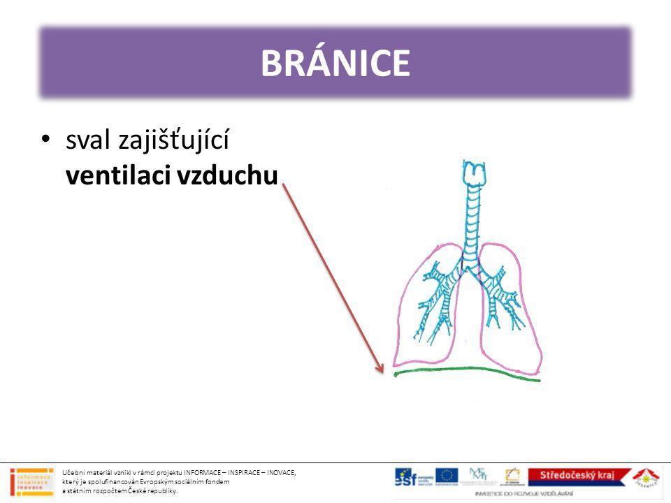 BRÁNICE sval zajišťující ventilaci vzduchu