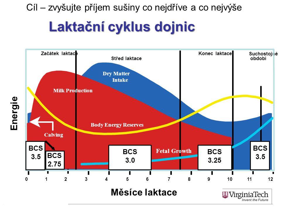 Laktační cyklus dojnic