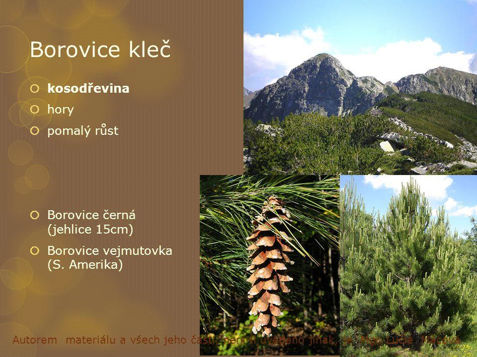 Borovice kleč kosodřevina hory pomalý růst