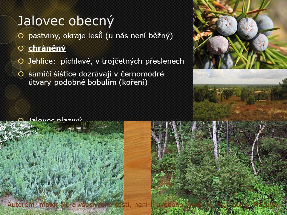 Jalovec obecný pastviny, okraje lesů (u nás není běžný) chráněný