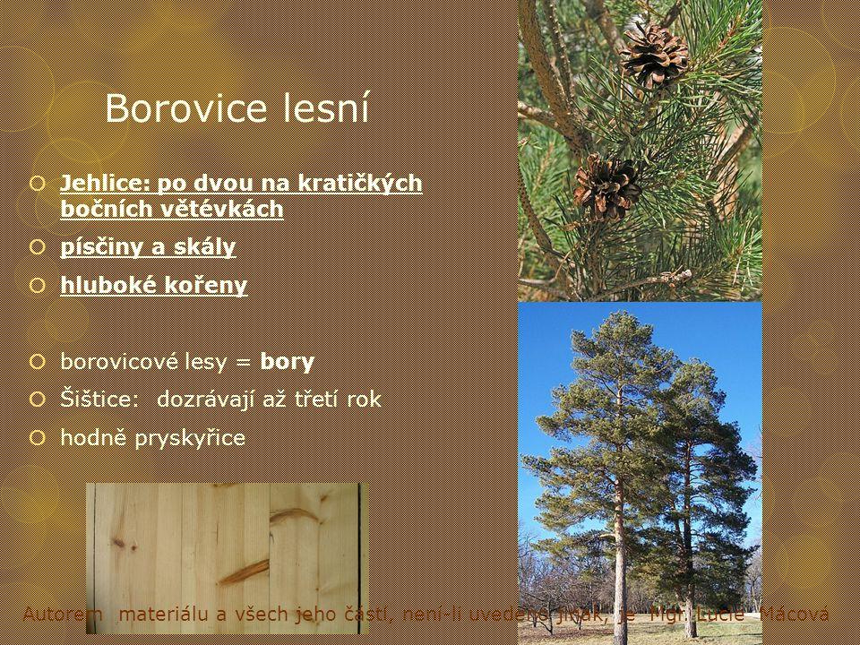 Borovice lesní Jehlice: po dvou na kratičkých bočních větévkách