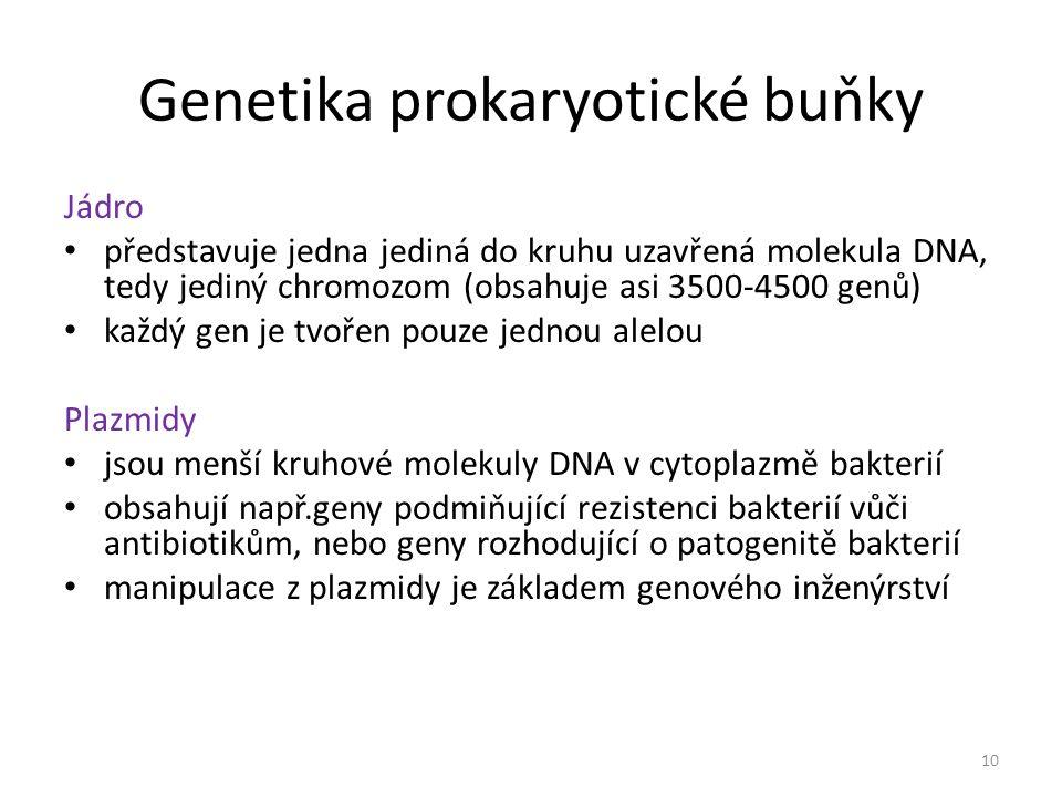 Genetika prokaryotické buňky
