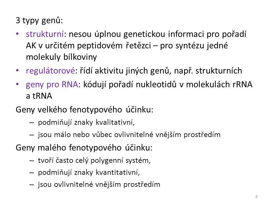 regulátorové: řídí aktivitu jiných genů, např. strukturních